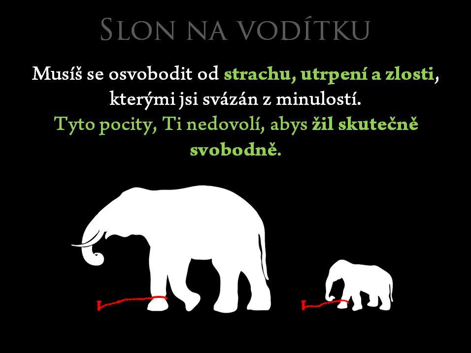 slon-na-voditku